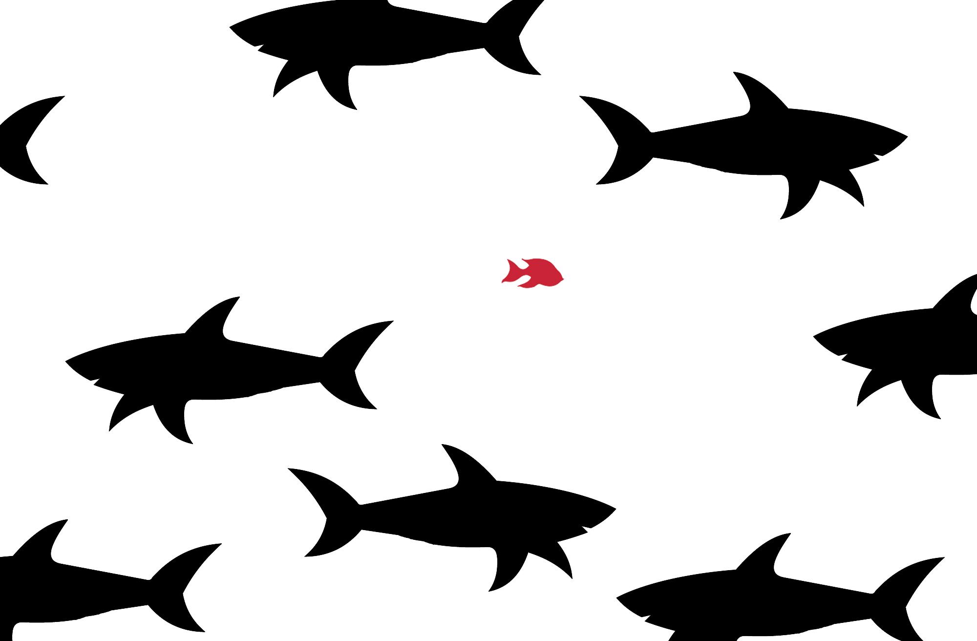 דגה קטנה בים של כרישים: מדוע לעסק קטן יש יתרון משמעותי ביצירת תוכן?